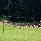 Pferde Folgaria