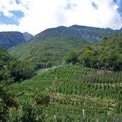 Apfelwiesen in der Umgebung