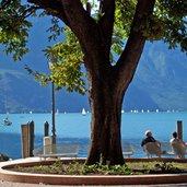 D-0283-riva-del-garda-lago-parkbank.jpg