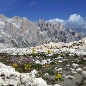 Kopie von: D-5092-giardinetto-tra-le-pietre-delle-dolomiti.jpg