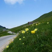 pampeago pass blumenwiese