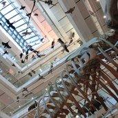 C-0012-Trento-Muse-pianoterra-scheletro-balena.jpg