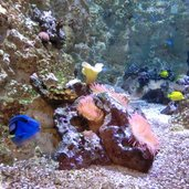 C-0037-Trento-Muse-acquario-pesci-tropicali.jpg