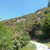 D-0923-bosco-e-strada-forestale.jpg