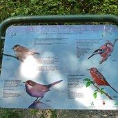 D-0977-tavola-informativa-uccelli.jpg