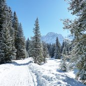 D-4971-sentiero-val-venegia-per-malga-venegia-inverno.jpg