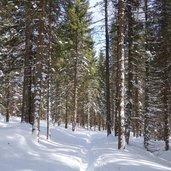 D-5198-bosco-presso-forcella-calaita-inverno.jpg