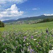 D-5640-estate-alta-val-di-non-prati-presso-cavareno-e-romeno.jpg