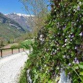 D-6904-sentiero-da-canale-di-tenno-al-lago-di-tenno-primavera.jpg