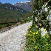 D-6905-sentiero-da-canale-di-tenno-al-lago-di-tenno-primavera.jpg