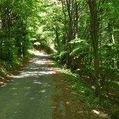 D-8228-sentiero-strada-discesa-da-malga-albi-a-garniga.jpg