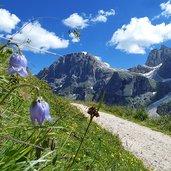 D-8518-prati-presso-baita-segantini-sullo-sfondo-monte-mulaz.jpg