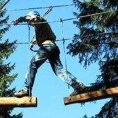 agility_forest01.jpg