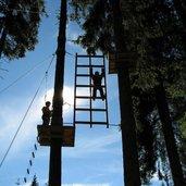 agility_forest_02.jpg