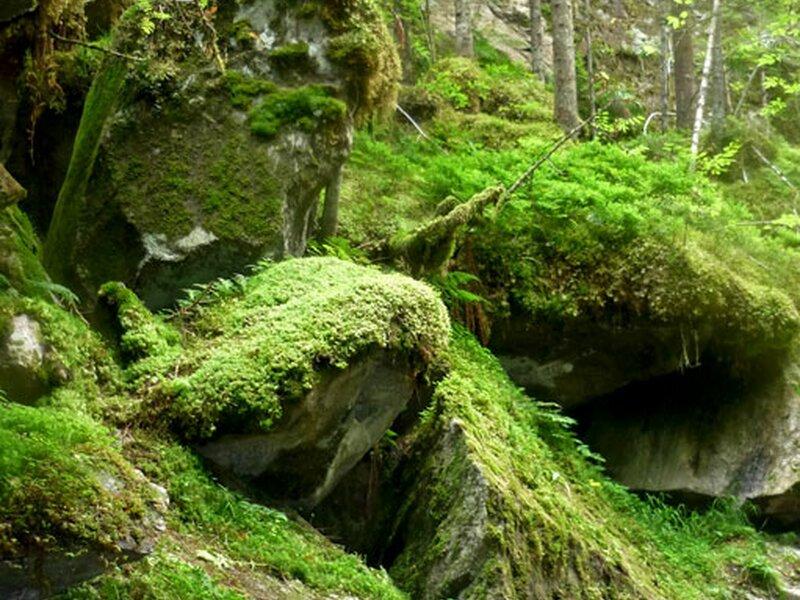 Fiume montagna sopra le pietre sfondi per il desktop picture