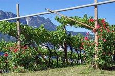 Vino Trentino