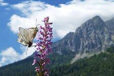 Natura e paesaggio Trentino