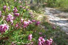 Escursioni primavera Trentino