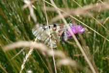 Farfalla Val di Rabbi