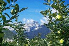 Strada delle mele e dei sapori del Trentino
