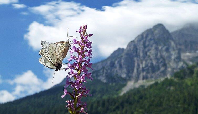 Natura e paesaggio, Foto: AT, © Peer