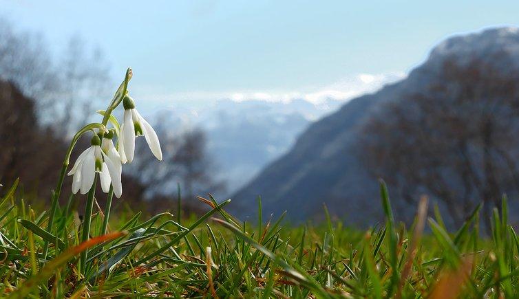 Sulle orme della primavera a Ledro, Foto: AT, © Peer