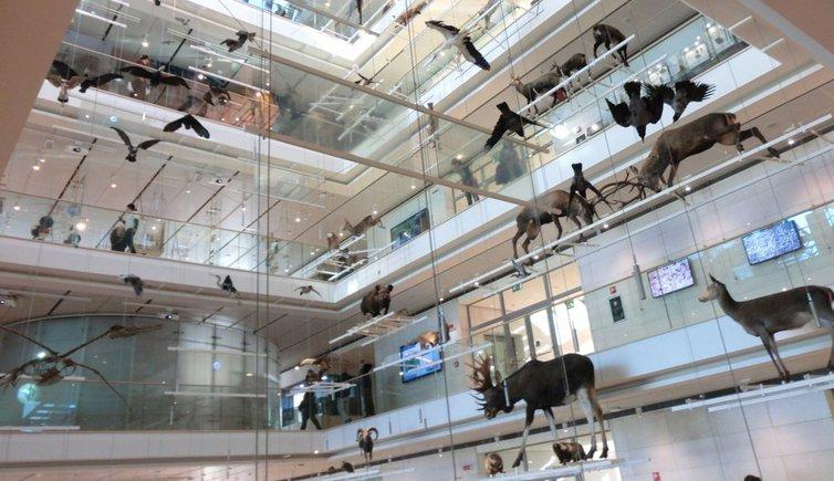 MUSE – Science Museum of Trento, Foto: MS, © Peer